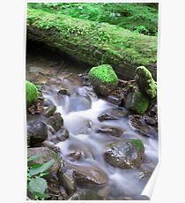 Nature Flow Poster