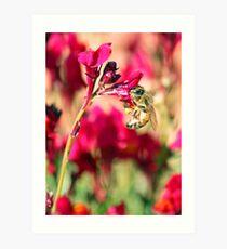 Linaria Bee  Art Print