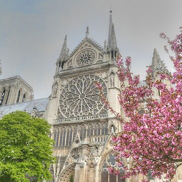 Cherry Blossom Notre Dame by Michaelm43