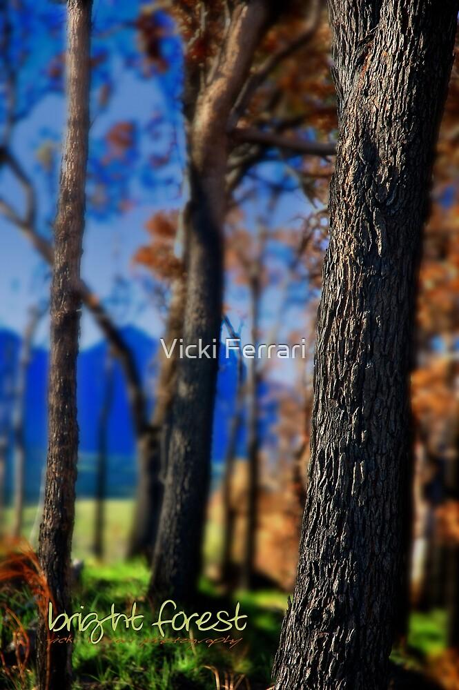 BRIGHT FOREST © by Vicki Ferrari