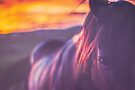 Sunset Horse 18 by Candice O'Neill
