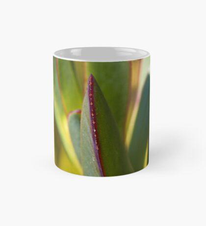 Winters Cactus Mug