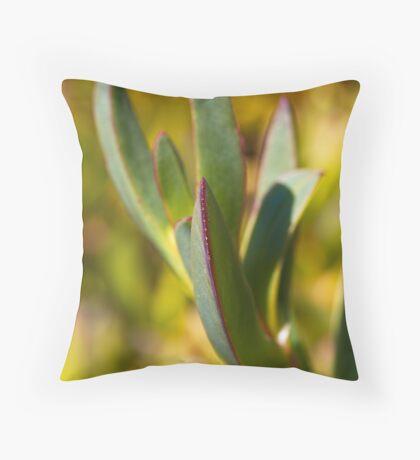 Winters Cactus Floor Pillow
