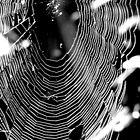 Spiderweb (II-b&w) by CapturedByKylie