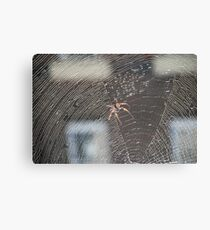 Deadly Spider Canvas Print