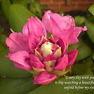 New Beginnings Flower Card by cinlaw