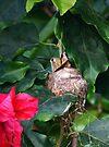 Nesting Hummer by Anne-Marie Bokslag