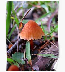 A Little Fungi... Poster