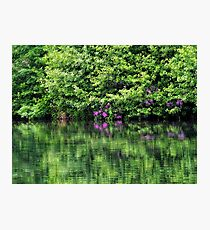 Spring Reflections Photographic Print