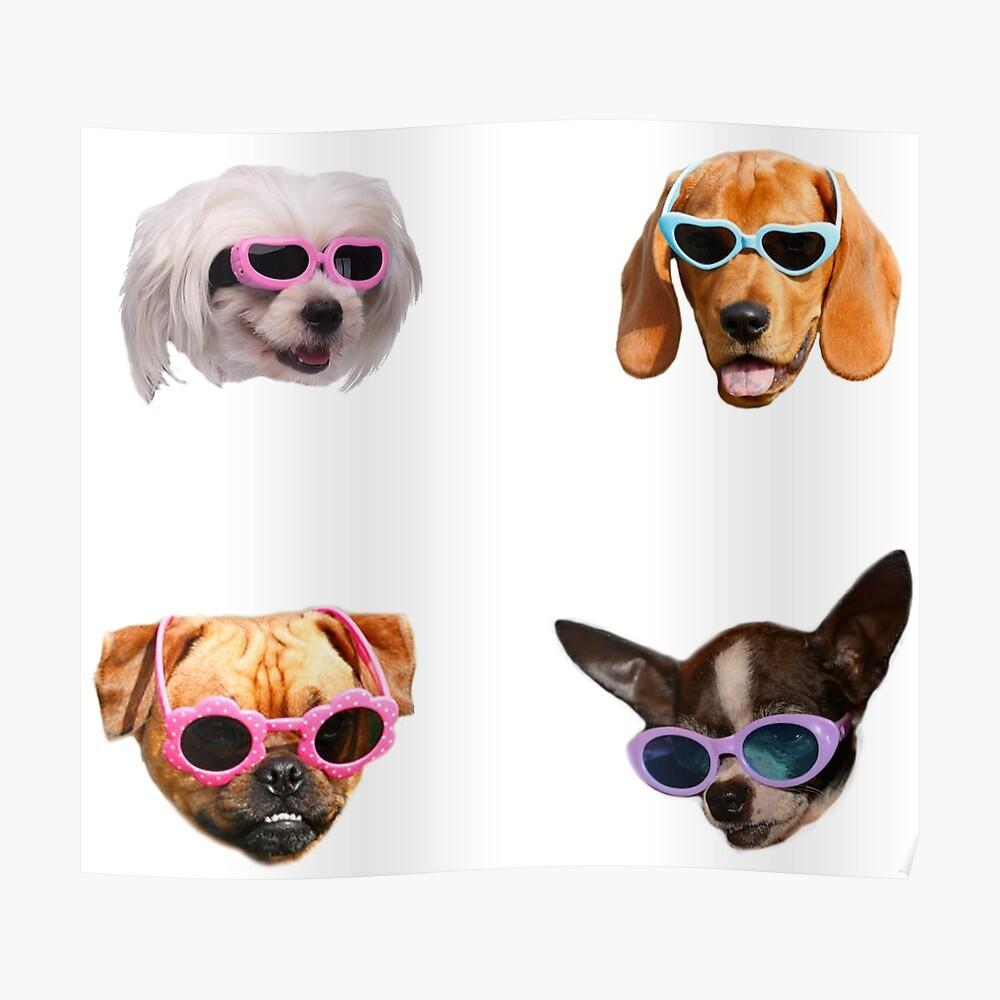 Pegatinas Doggo: Gafas De Sol # 4 Póster
