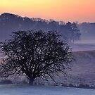 Winter Field by James Coard