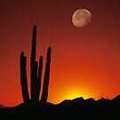 Saguaro Moon by Christopher  Boswell
