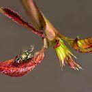 Tiny fly by nadine henley