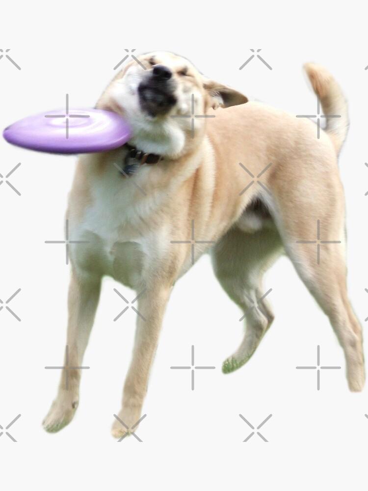 Frisbee Dog by Elisecv