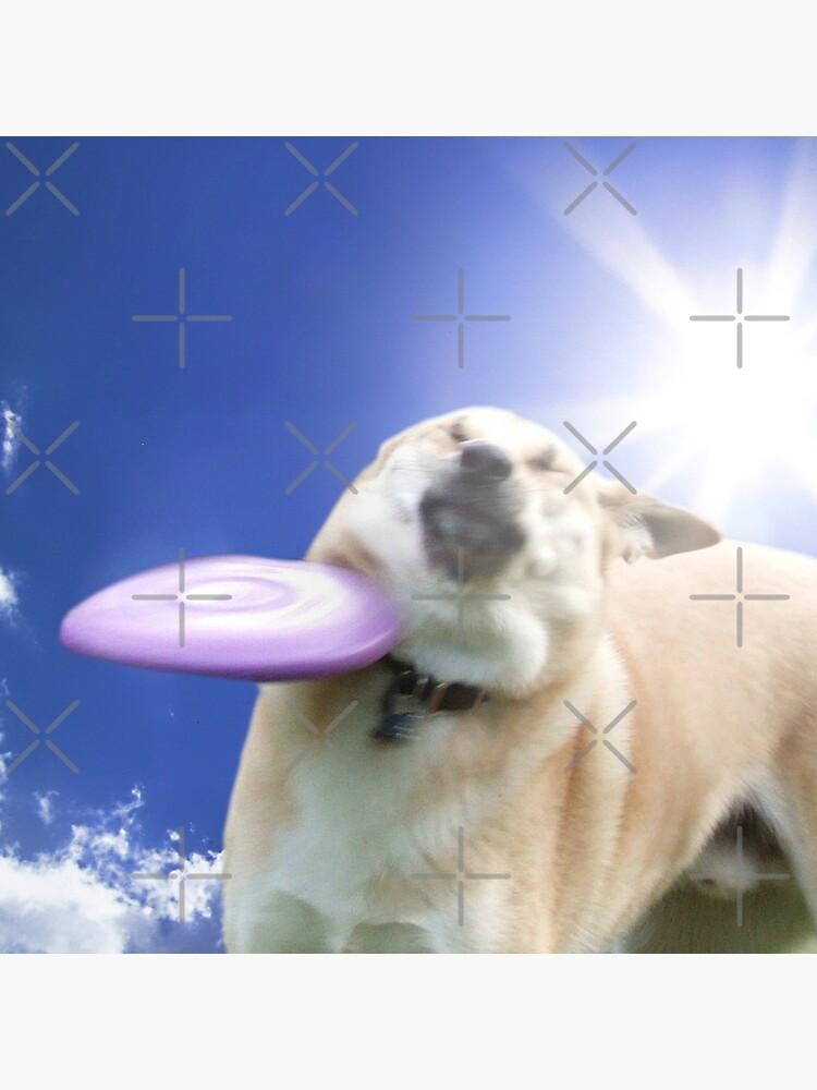 Frisbee Dog, Doggo #4 by Elisecv