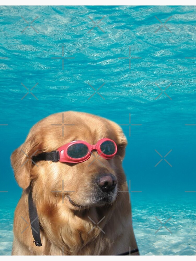 Swimmer Dog by Elisecv