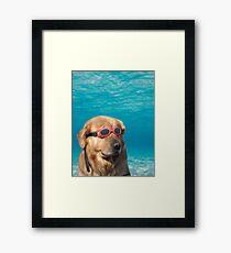 Lámina enmarcada Perro nadador