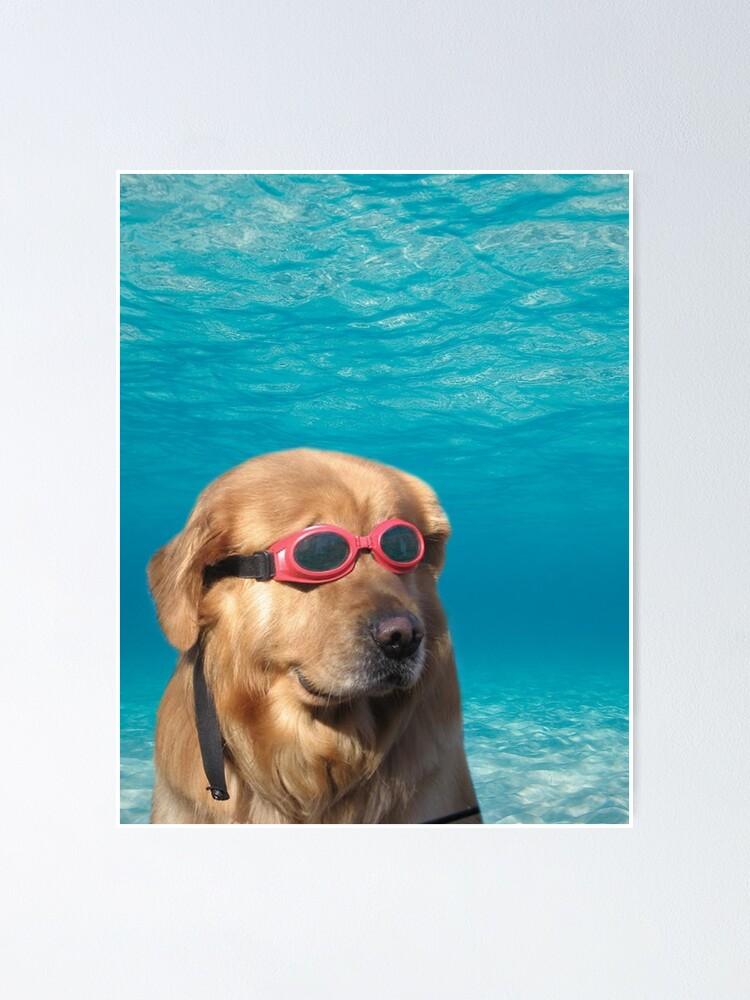 Alternate view of Swimmer Dog Poster