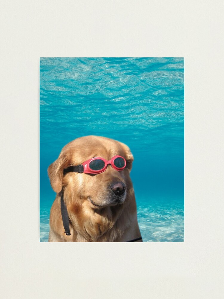 Alternate view of Swimmer Dog Photographic Print