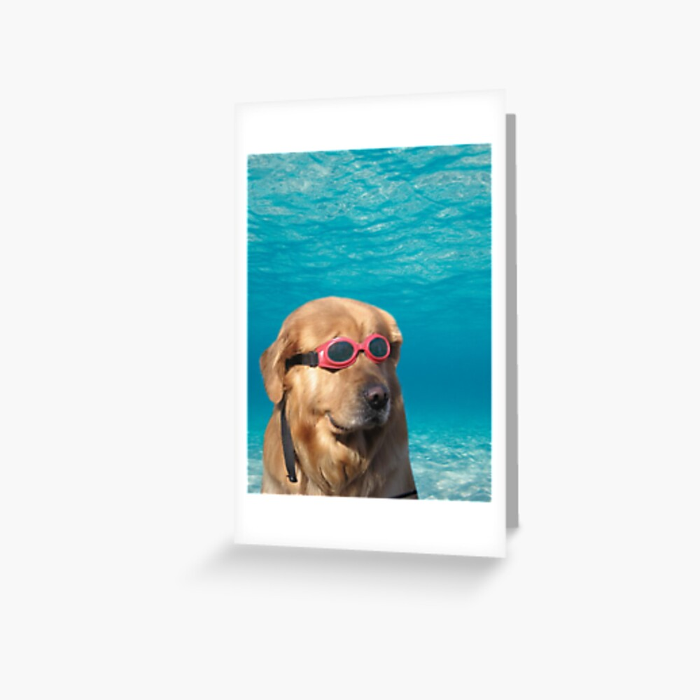 Swimmer Dog Greeting Card