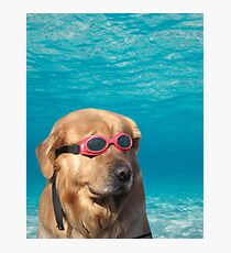 Swimmer Dog Photographic Print