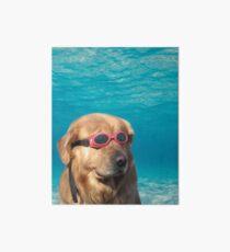 Lámina rígida Perro nadador