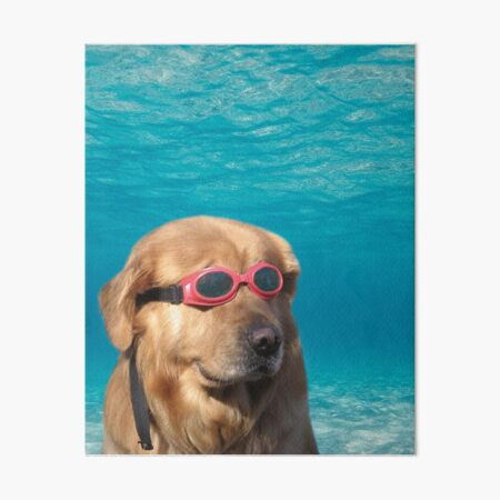 Swimmer Dog Art Board Print