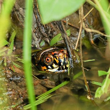 Box Turtle and Tadpoles by FrankieCat