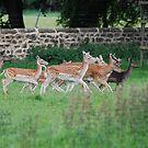 Ripley Castle deer park by dougie1