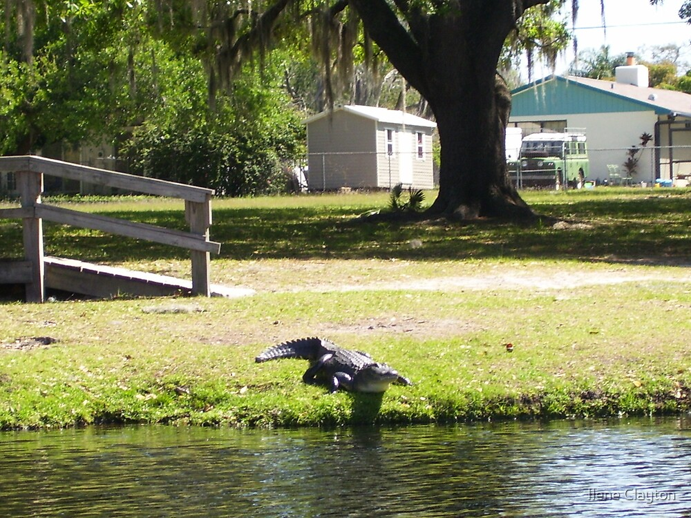 Visitor by Ilene Clayton