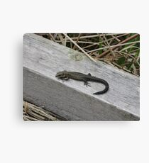 British Lizard Canvas Print