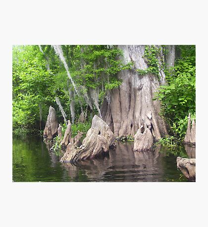 Stumplestiltskin Photographic Print