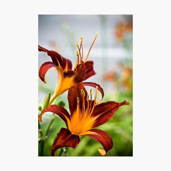 Floral 27 Photographic Print