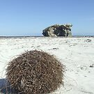 Two Rocks Tumbleweed by stormygt