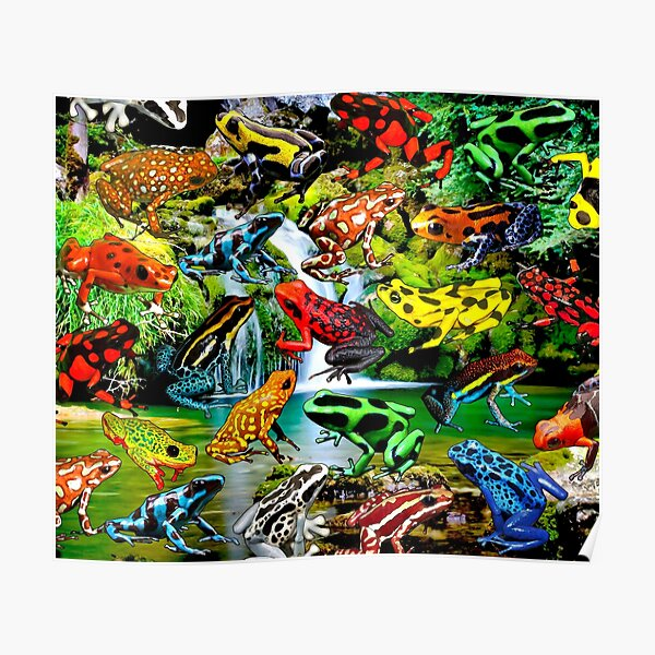 RAINFOREST FROGS Poster