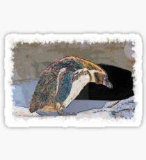 Humboldt penguin drawn Art Sticker