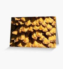 Sago Seed Pod Greeting Card