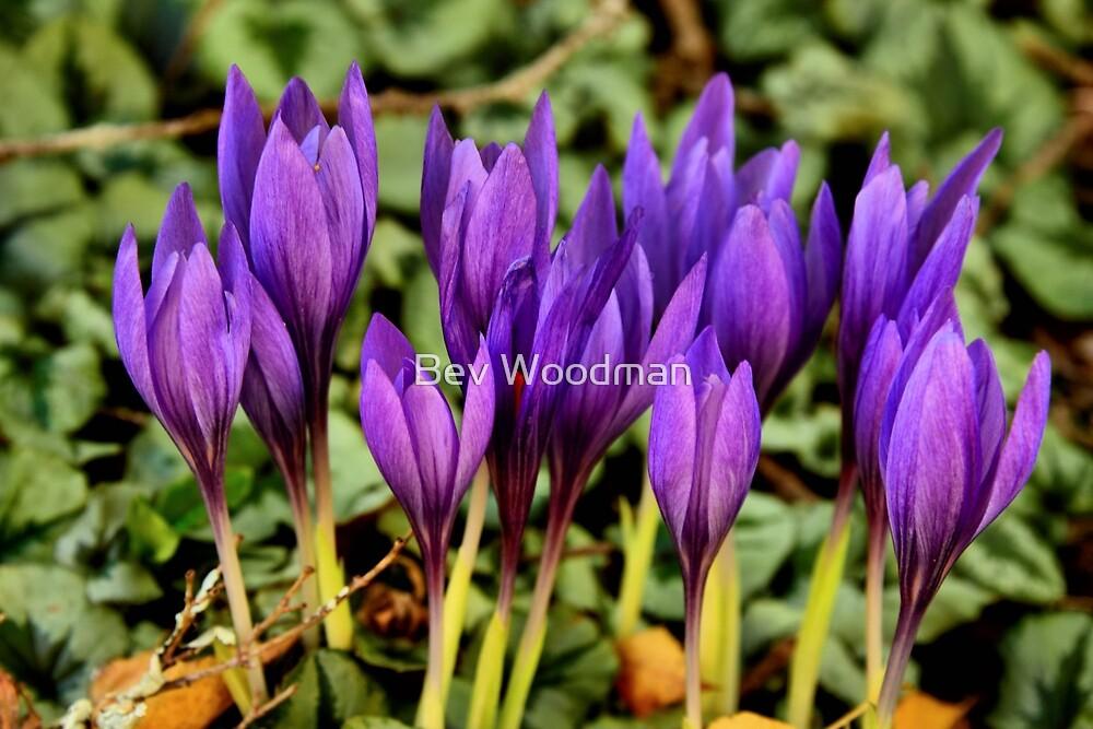 Floral Enchantment - Merry Garth Mt Wilson NSW by Bev Woodman