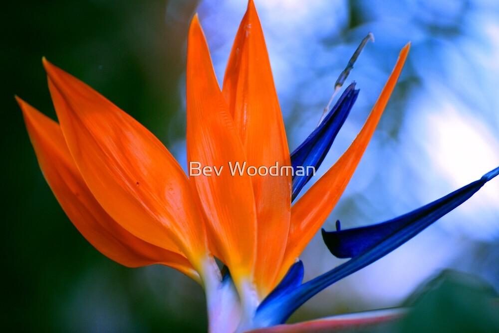 Bird of Paradise by Bev Woodman