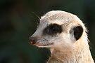 Meerkat by Leanne Allen