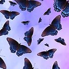 Blue Wing Butterflies Evening Purple Haze by futureimaging