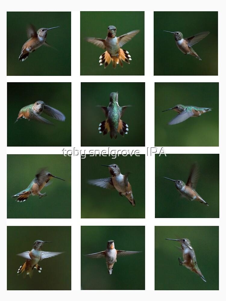 Humming Bird Montage by tobysnelgrove