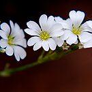 Janis' Flowers by Pamela Hubbard