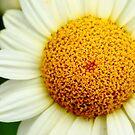 Sponge Sun by Remy NININ