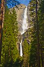 Naturaly Framed by photosbyflood