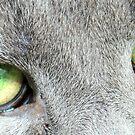 Green eyes by BonnieColeman