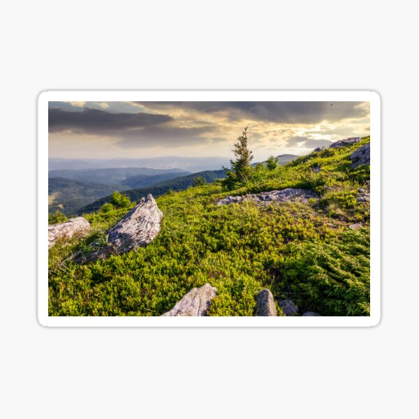 small spruce tree among the rocks Sticker