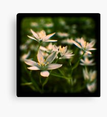star of david flowers Canvas Print
