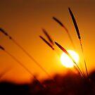 Sundown by James Coard