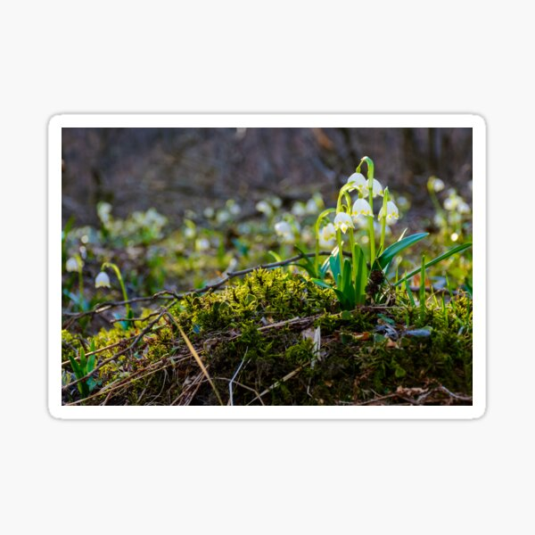 bunch of snowflake flowers on a mossy hump Sticker